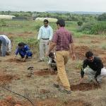 tree-plantation-environment
