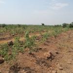 tree-plantation-image-6