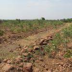 tree-plantation-image-7