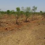 tree-plantation-image-8