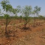tree-plantation-image-9