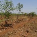 tree-plantation-image-10