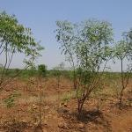 tree-plantation-image-11