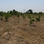tree-plantation-image-12