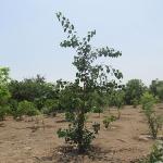 tree-plantation-image-13