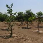 tree-plantation-image-16