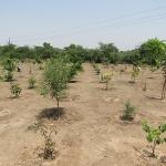 tree-plantation-image-2