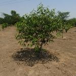 tree-plantation-image-3
